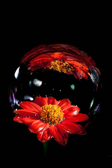Bubble flower - Red - Black background