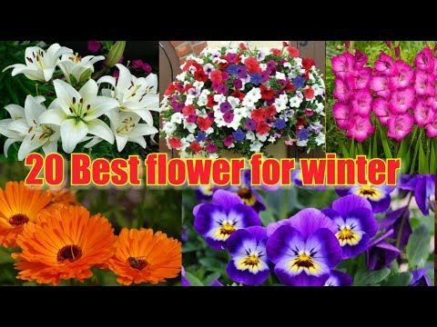 Best Winter Flowers In Indian Weather Youtube In 2020 Winter Flowers Indian Flower Names Seasonal Flowers