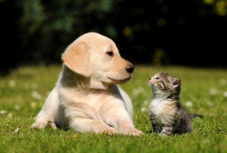http://health.detik.com/read/2015/02/02/140346/2820958/763/kisah-para-zoophilia-bercinta-dengan-kuda-kambing-dan-kucing?l991104755