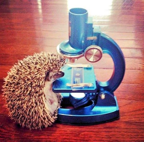 Hedgehog Scientist<---looks like Jawn wanted to show sherlock he, too could do experiments: