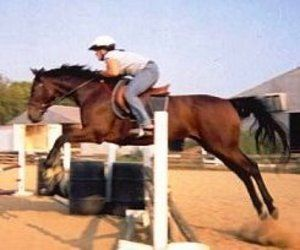 Thoroughly Thoroughbreds - What's the Horse of Your Dreams?