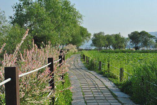 Gil, Alam, Taman, Park, Kaki, Jalur   풍경 사진, 정원길, 사진