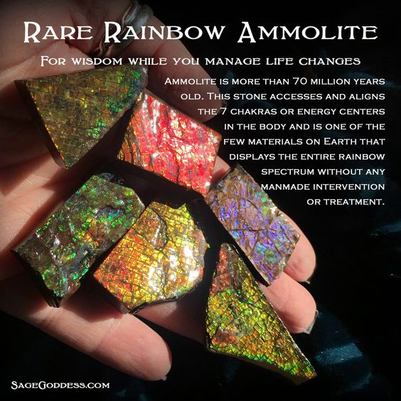 Rare Rainbow Ammolite slice for wisdom while you manage life changes. What life…