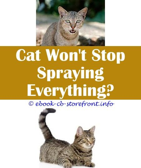17 Unbelievable Cat Spray Remover Tips Admirable