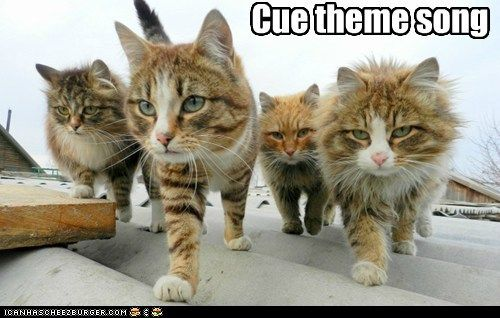.: Kitty Cats, Reservoir Cats, Funny Cat, West Side, Kitty Kitty, Cat S