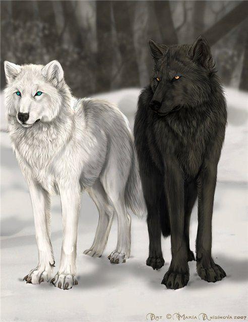 Cuento. Los dos lobos