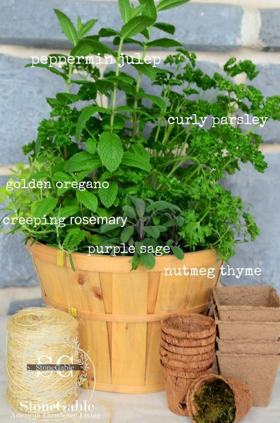 KITCHEN HERB GARDEN IN A BUSHEL BASKET - Peppermint Julep, Curly Parsley, Golden Oregano, Creeping Rosemary, Purple Sage, and Nutmeg Thyme - start them in a basket and when the weather is nice enough, transplant them to the garden or outside pots (you can leave one or two plants to grow in the basket)