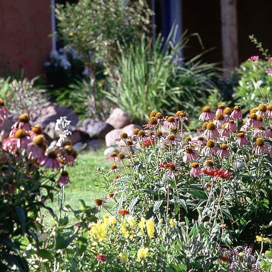 Choose Easy-Care Plants