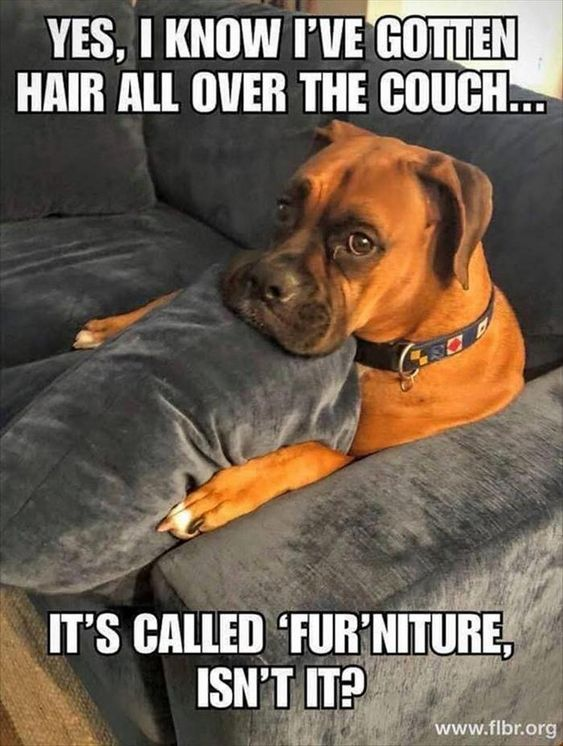 Amazing Magic Clean Pro Funny Dog Memes Funny Dog Pictures Funny Animal Jokes