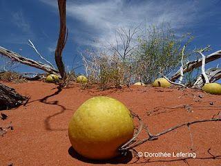 Red dunes. South Australia