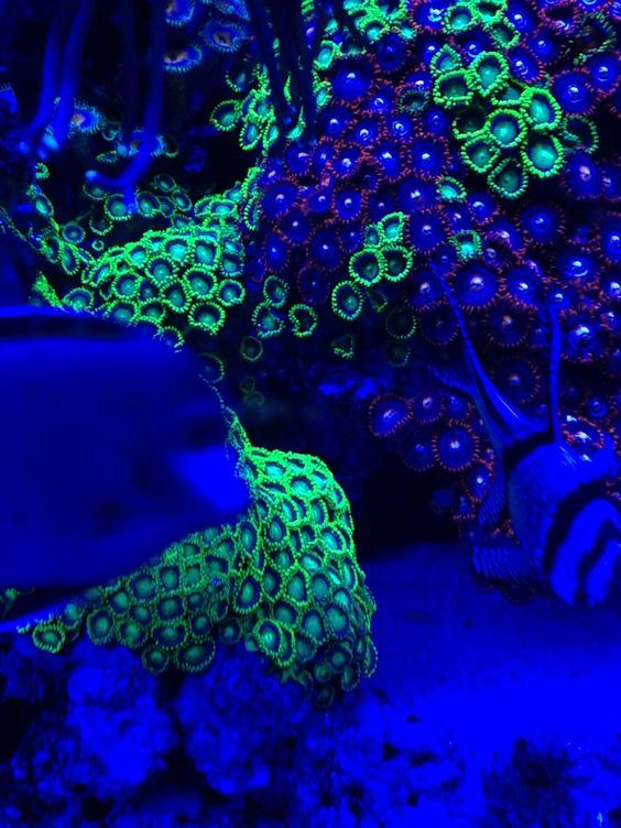 Black light saltwater tank under the sea love for Black light for fish tank