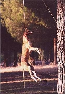 Petition · To boycott Spain as a holiday destination until they enforce their…