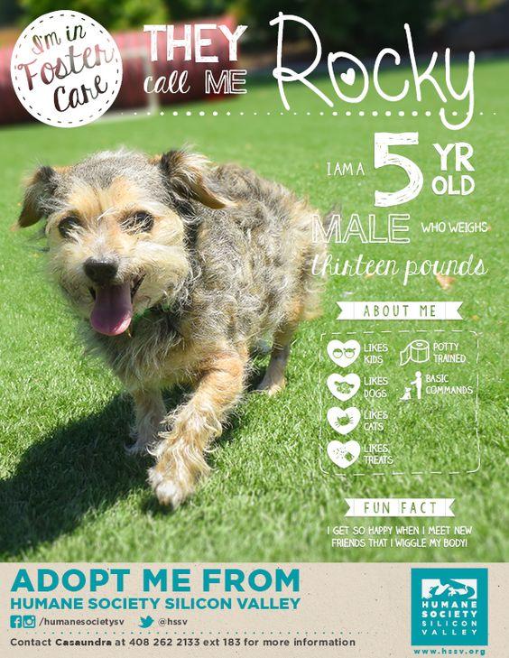 Rocky 119161 Dog Humane Society Silicon Valley Humane Society Dog Adoption Pet Adoption