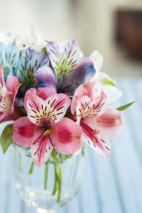 The Meaning Behind Popular Valentine S Day Flowers In 2020 Flower Meanings Romantic Flowers Alstroemeria