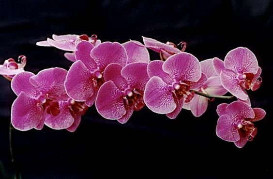 Orchids are one of my favorite flowers, as of several years ago. They are so expensive to buy though.