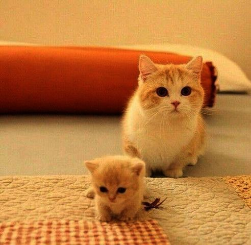 Cats And Kittens For Adoption Near Me His Cute Cartoon Animals To Trace Minus Cute Australian Animals Pictures A Cute Cats And Kittens Kittens Cutest Cute Cats