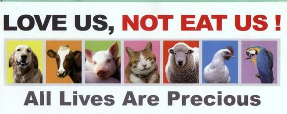 Image result for love us dont eat us animals