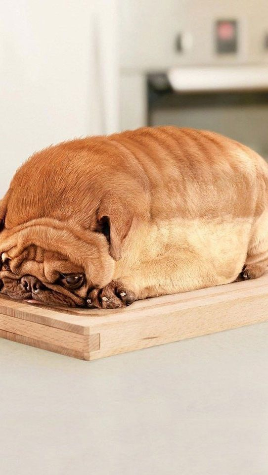 If u think this is a loaf of bread...  Look CLOSER!!!
