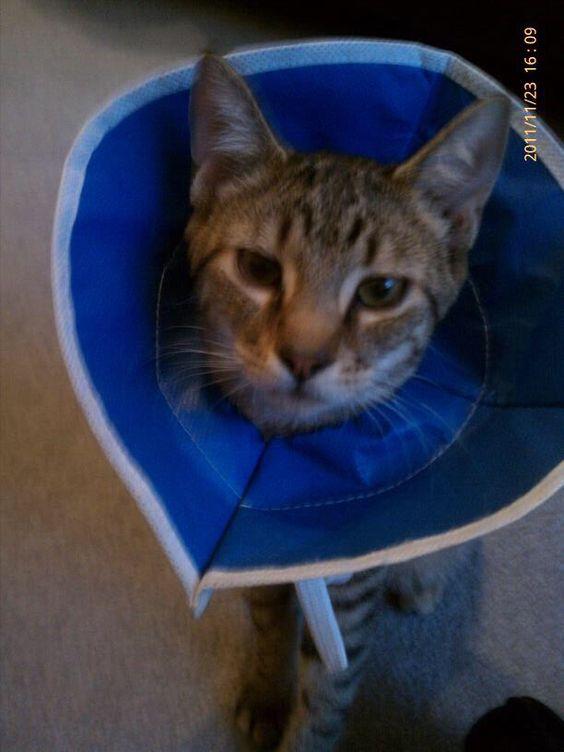 the cone that becomes a super cat cape