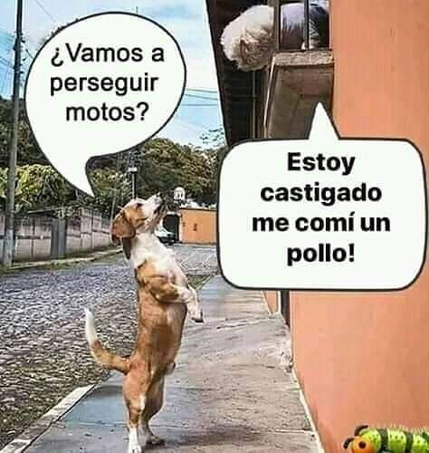 1 858 Me Gusta 77 Comentarios Julia Hernandez Pecositasexy1964 En Instagram Chistes Tiernos Chistes Whatsapp Memes Humor De Chicos