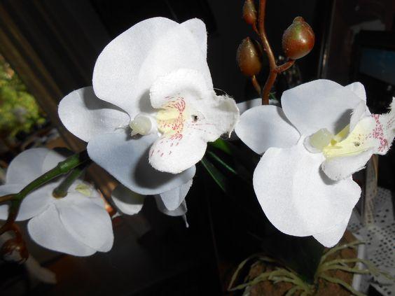 Die Orchideen meiner Mutter/Aurora-Mia Cantate
