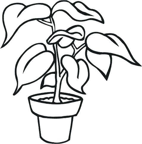 Pagina Para Colorear De Maceta Para Para Para Para Dibujos Para Colorear De Macetas Con Flores Flores En Maceta Plantas En Maceta Flores Pintadas