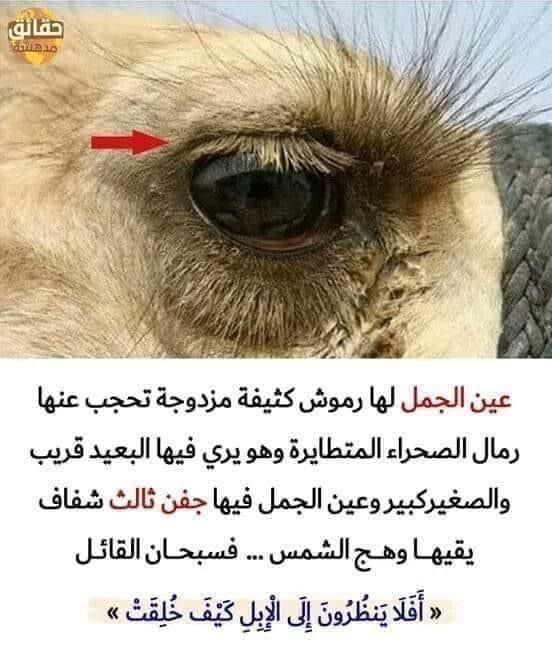 Pin By Wafa Swedik On معلومات مفيدة Arabic Quotes Quotes