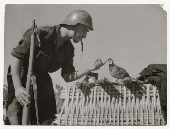 Robert Capa, [Soldier of the Partido Obrero de Unificación Marxista (POUM) with dove, Aragón, Spain], August 1936