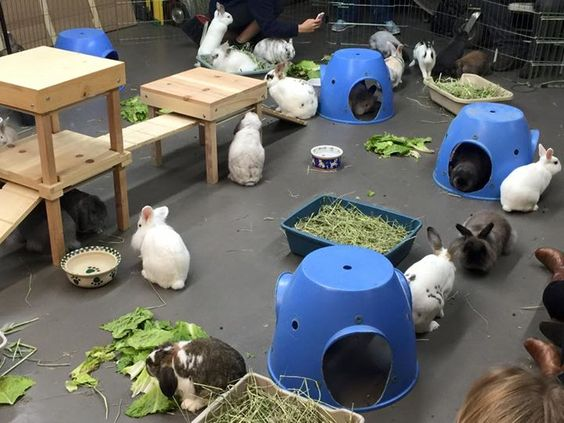 Adoptable bunnies at Bunny Bunch Montclair!