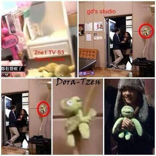 Dara turtle was found in gd studio