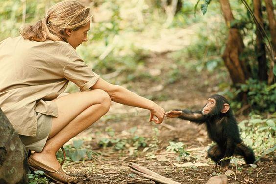 Tanzania | 1964   Fotografia di Hugo Van Lawick   Guardando questo gesto semplice tra la primatologa Jane Goodall e il piccolo scimpanzé Flint si potrebbe pensare che il mondo sia un'unica grande famiglia... E' la filosofia che dal 1888 accompagna la National  Geographic    Society, che per m
