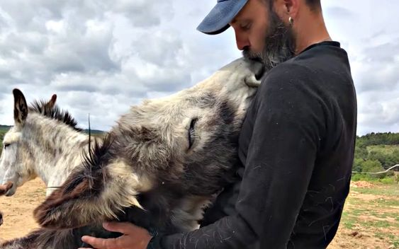This video posted on the Santuario Compasion Animal Facebook page of a donkey named Pippin getting showered with kisses by his caretaker is the sweetest thing you'll see all day! The connection between these two is undeniable and the story behind it will make your heart melt.