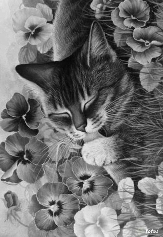 Advanced Cat Coloring Pages : Coloring pansies and kittens on pinterest
