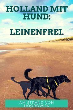 Hundestrand Noordwijk Ohne Leine Am Kilometerweiten Strand In Holland Hundestrand Holland Strand Urlaub Mit Hund Holland