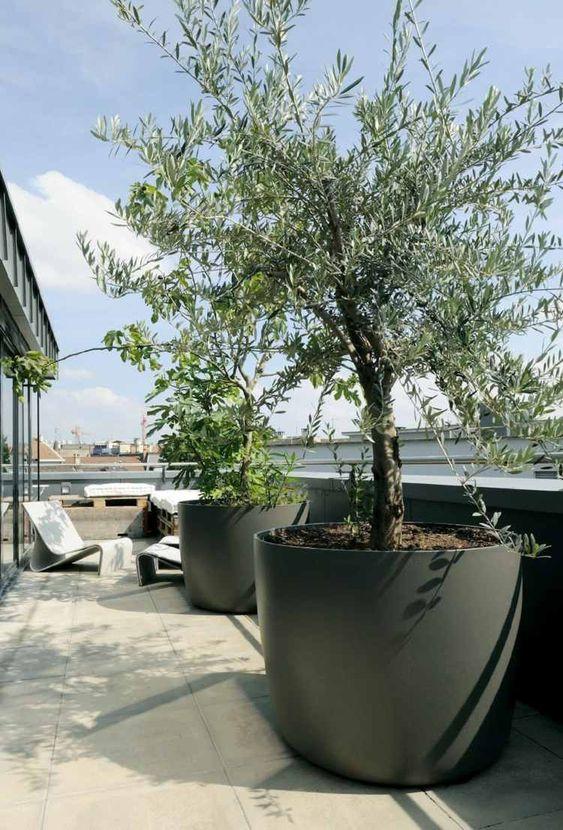 Terrasse Gestalten Mit Großen Blumentöpfen Olivenbäume | Terrasse ... Terrasse Gestalten Olivenbaum