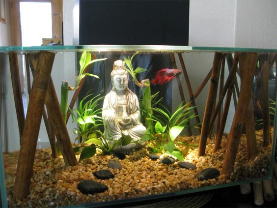 Bamboo plants bamboo and betta on pinterest for Growing plants with fish
