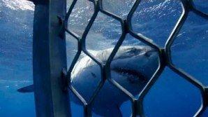 SURFREAK: Discovery Channel - Barato de tubarão é heavy metal