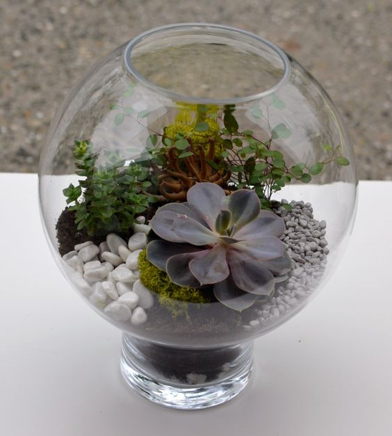 Terrarium de plantes grasses creations compositions for Catalogue de plantes