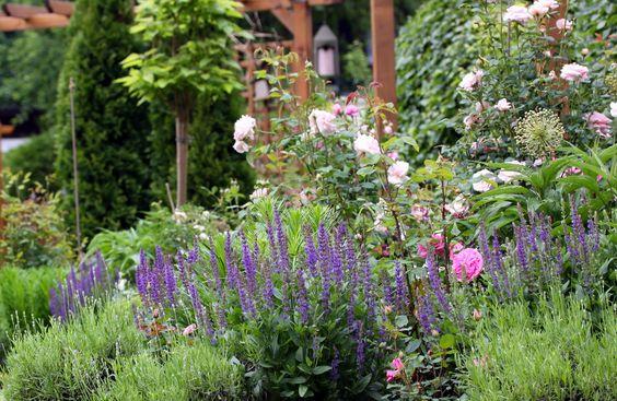 Blick ins Englische-Rosen-Beet - Bilder und Fotos