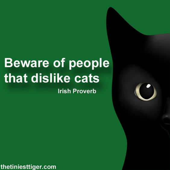 Never Trust Someone Who Doesn T Like Cats Irish Proverb