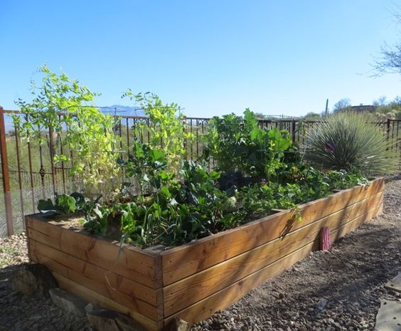A customer 39 s raised bed garden looks beautiful in the warm for Beautiful raised gardens