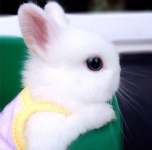 .fotos de conejos bebés