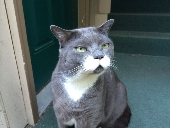 A very distinguished looking cat!