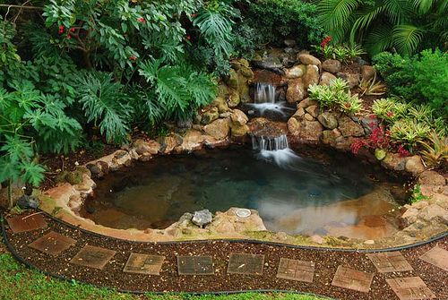 Ponds waterfall design and waterfalls on pinterest for Fish pond cover ideas
