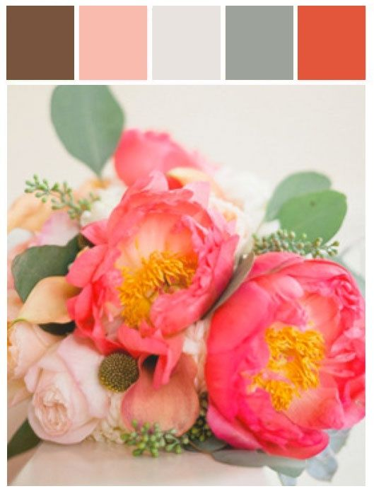 Coral Color Palette