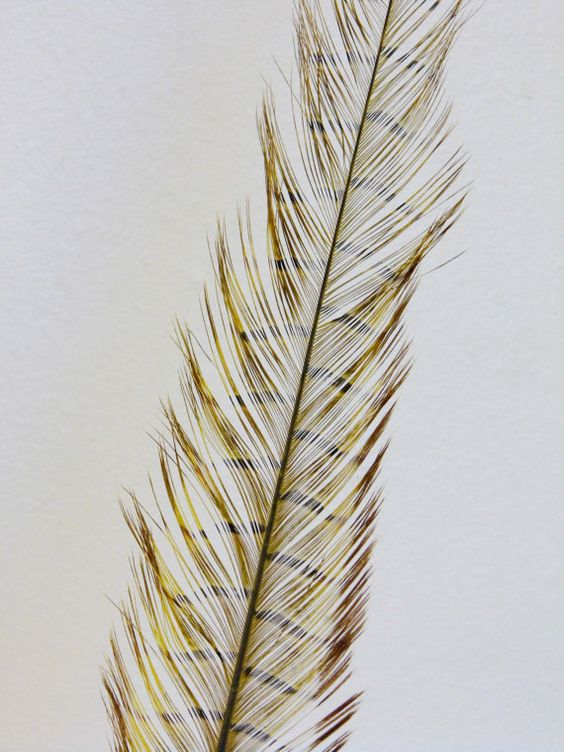 Millinery Feathers  Burnt Pheasant Feather  by simplysilverbyheena