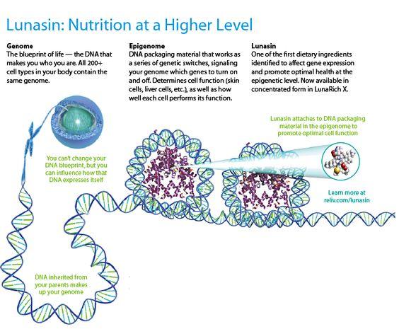 Lunasin and Epigenetics #lunasin #reliv wwwmainereliv - new blueprint gene expression