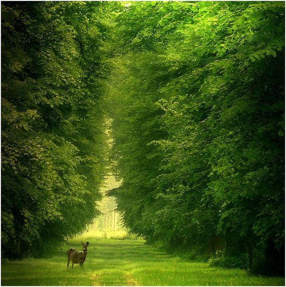 Deer In Verdant Green Setting.