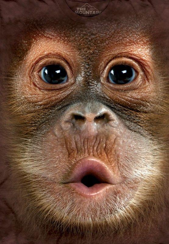 Big Face Baby Orangutan custom t-shirt design by themountain