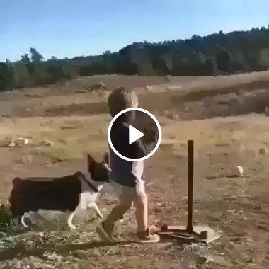 O melhor amigo do menino é cãozinho